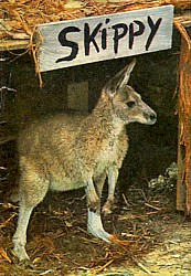 Skippy in her 'room' at Ranger Headquarters.